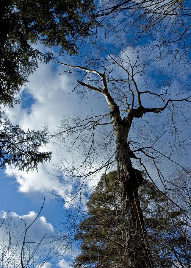 Reach For The Sky Photograph  - Reach For The Sky Fine Art Print
