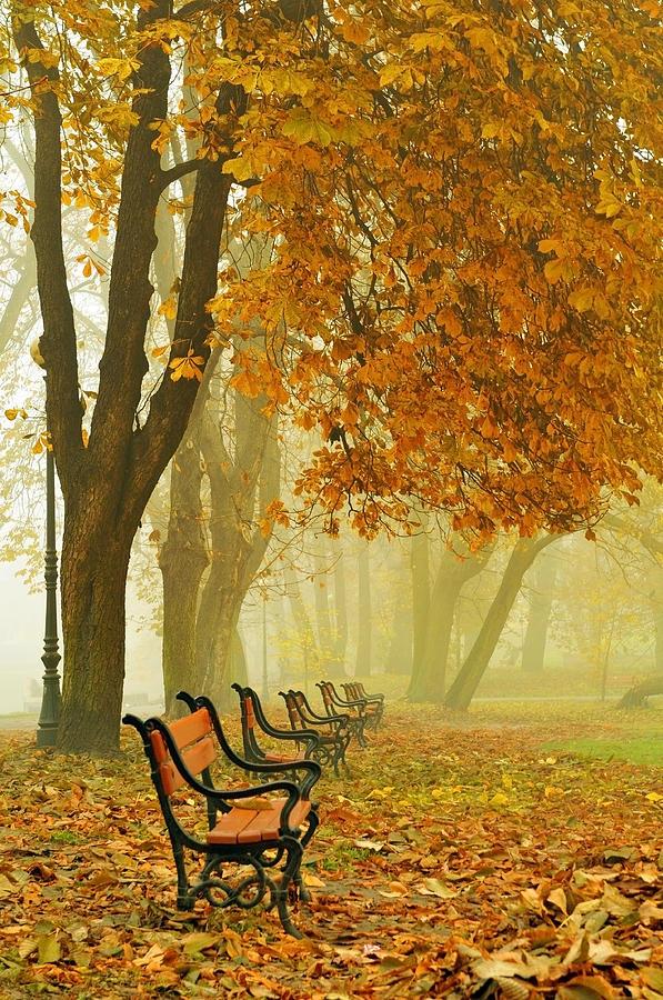 Alley Photograph - Red Benches In The Park by Jaroslaw Grudzinski