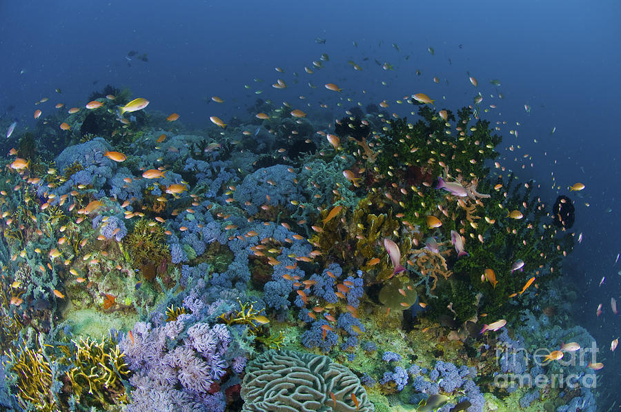 Reef Scene With Coral And Fish Photograph
