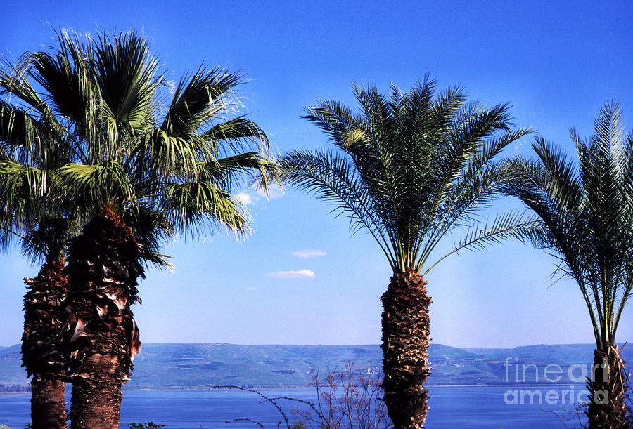 Sea Of Galilee From  Mount Of The Beatitudes Photograph