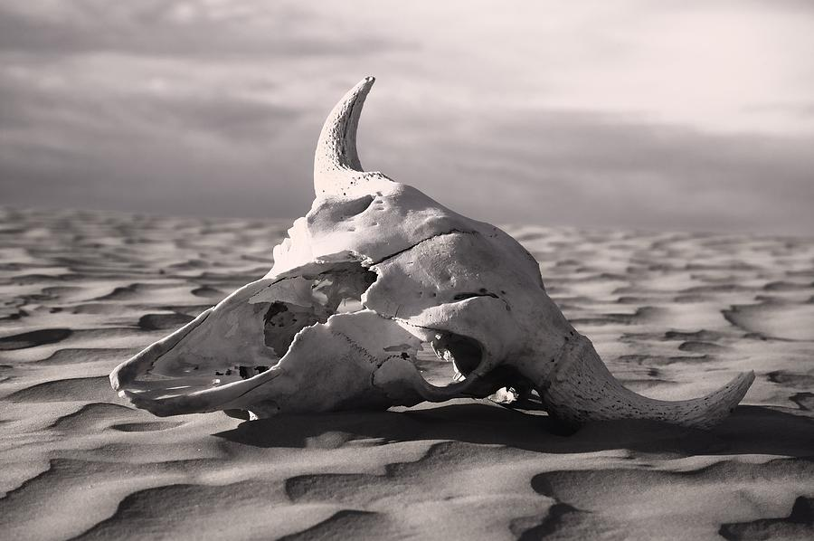 Skull In Desert is a photograph by Carson Ganci which was uploaded on ...