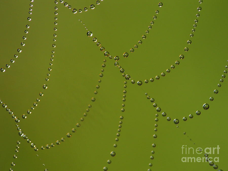 Spiderweb Photograph  - Spiderweb Fine Art Print