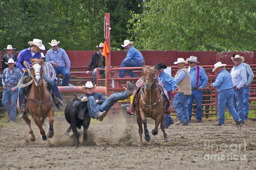 Steer Wrestler Photograph  - Steer Wrestler Fine Art Print