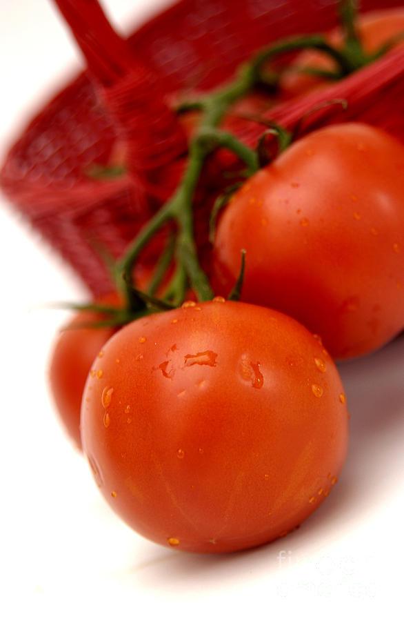 Vine Photograph - Tomatoes by Bernard Jaubert
