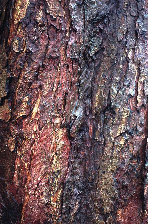 Tree Bark Photograph