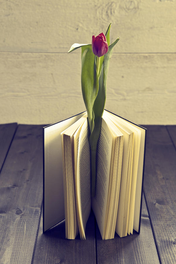 Tulip In A Book Photograph  - Tulip In A Book Fine Art Print