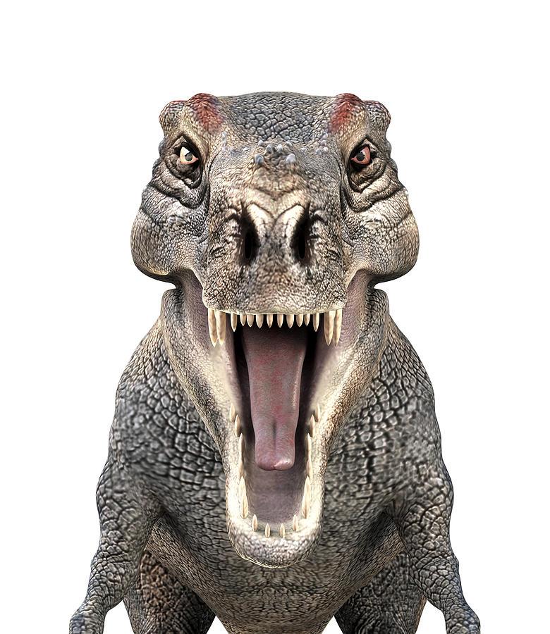 Tyrannosaurus Rex Dinosaur Photograph