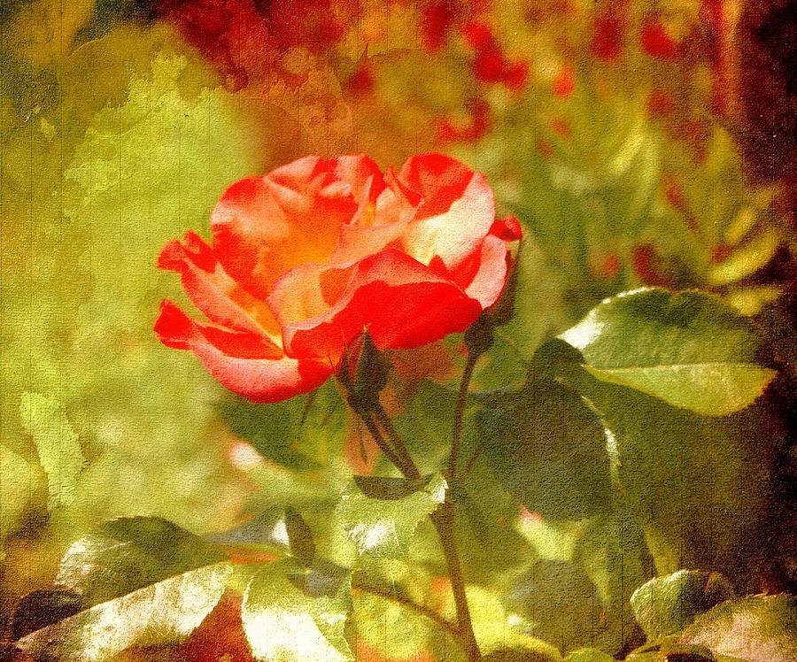 Vintage Rose Photograph