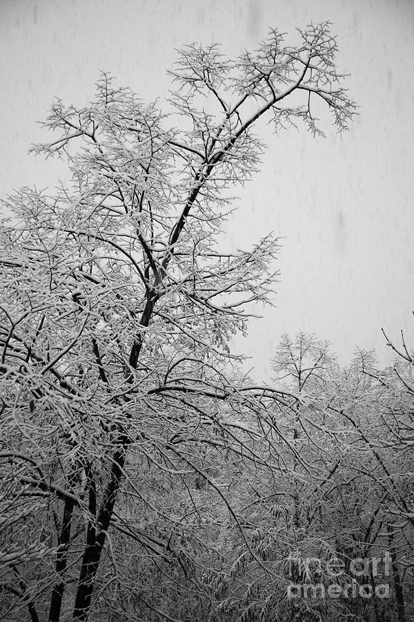 Winter Photograph  - Winter Fine Art Print