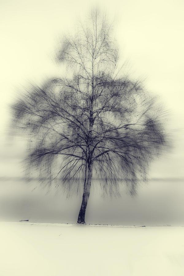 Tree Photograph - Winter Tree by Joana Kruse