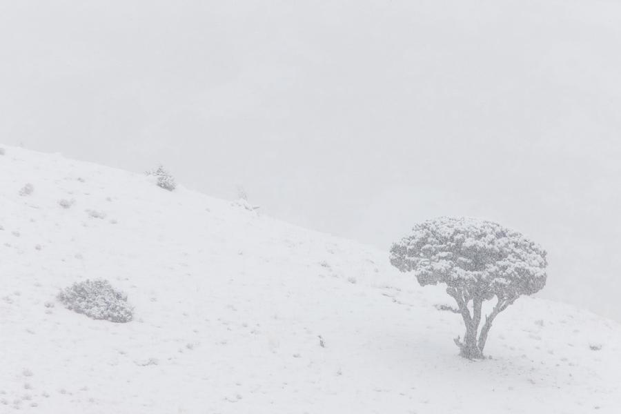 Yellowstone Park Wyoming Winter Snow Digital Art