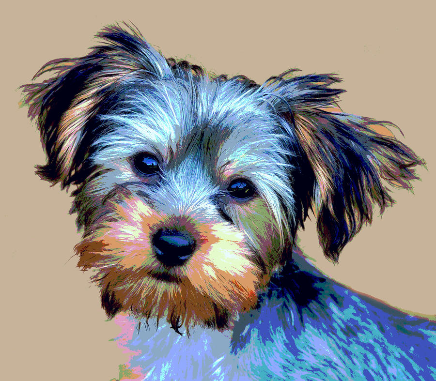 Yorkie Pup Digital Art