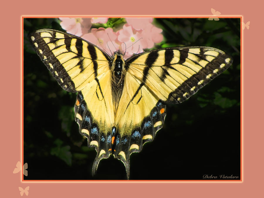 Butterfly Collection Photograph