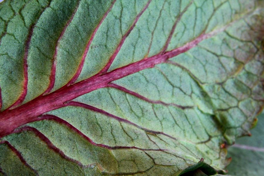 2010 Hydrangea Leaf Close Up 5 Pyrography