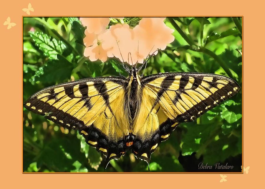 Designer Butterfly Collection Photograph - Butterfly Collection by Debra     Vatalaro