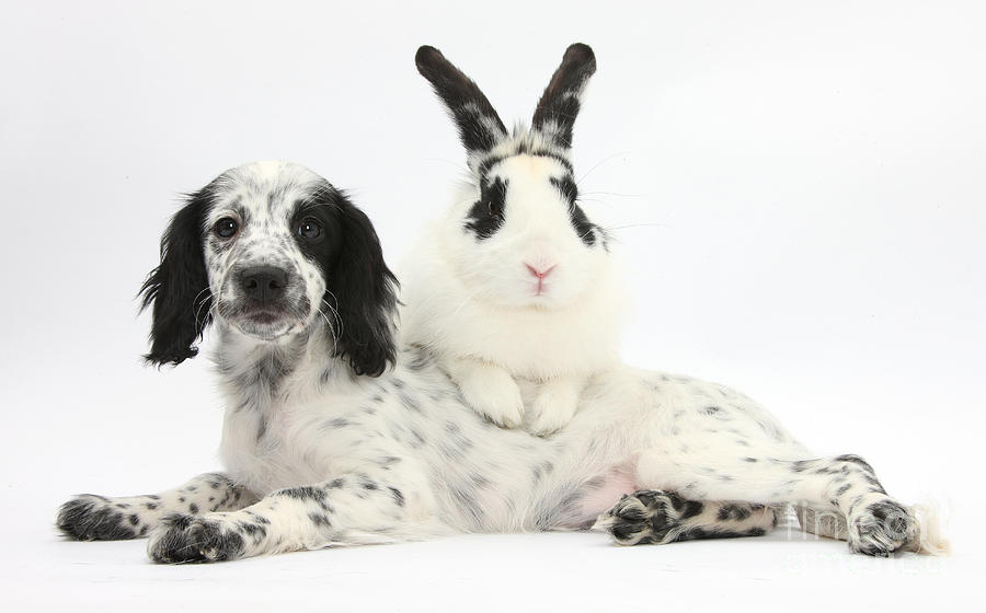 Puppy And Rabbit Photograph  - Puppy And Rabbit Fine Art Print