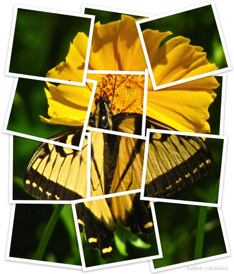 Butterfly Collection Photograph  - Butterfly Collection Fine Art Print
