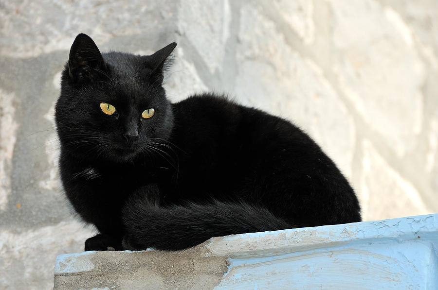 Cat In Hydra Island Photograph  - Cat In Hydra Island Fine Art Print