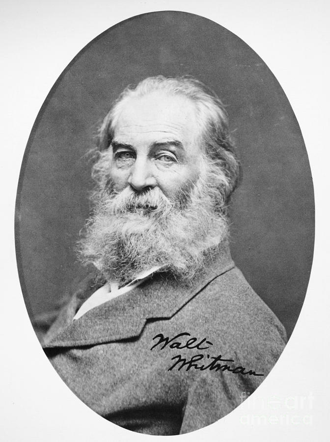Walt Whitman (1819-1892) Photograph  - Walt Whitman (1819-1892) Fine Art Print