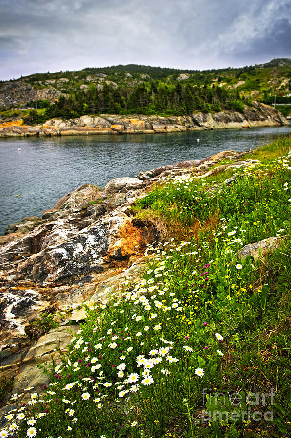 Atlantic Coast In Newfoundland Photograph  - Atlantic Coast In Newfoundland Fine Art Print