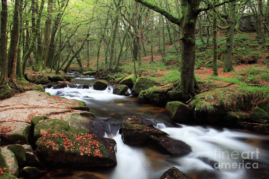 Autumn At Golitha Falls Photograph