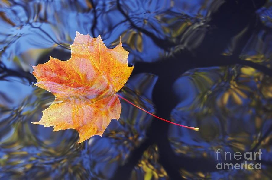 Leaf Photograph - Autumn Leaf On The Water by Michal Boubin