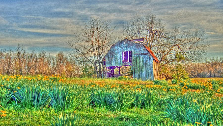 Barn In Field Of Flowers Photograph  - Barn In Field Of Flowers Fine Art Print
