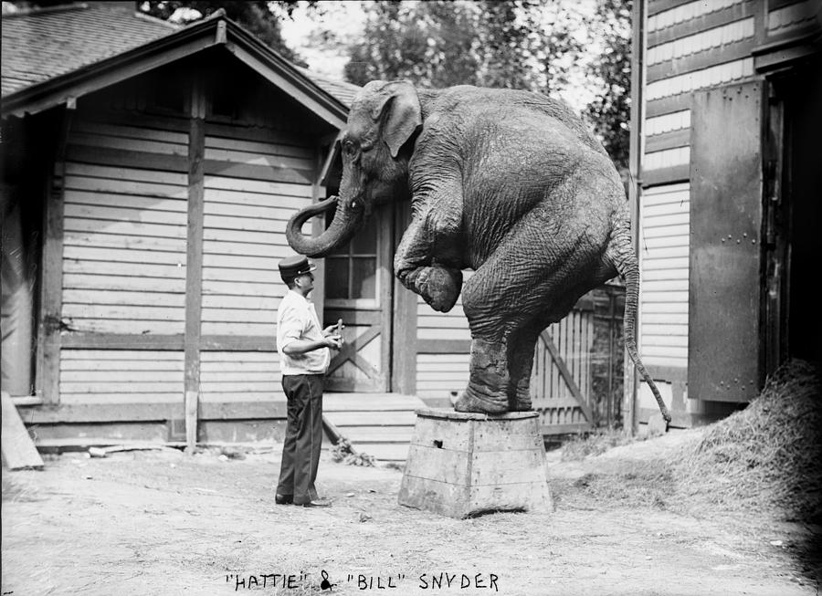 Bill Snyder, Elephant Trainer Photograph