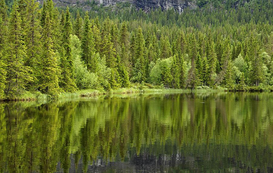 Calm Lake Reflection Pyrography