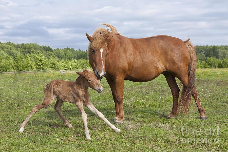 Newborn horse standing - photo#1