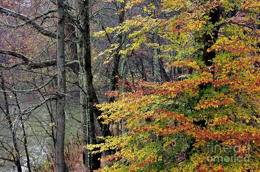 West Fork River Photograph - Fall Along West Fork River by Thomas R Fletcher