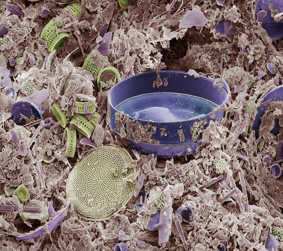 Fossilised Diatoms, Sem Photograph
