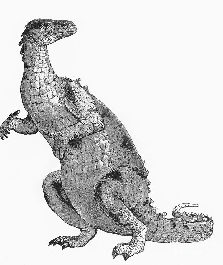 Iguanodon, Mesozoic Dinosaur Photograph