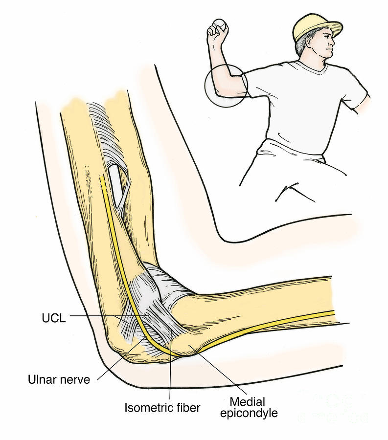 Illustration Of Elbow Ligaments Photograph