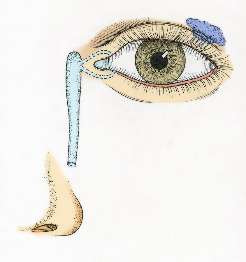 Illustration Of Tear Duct Photograph
