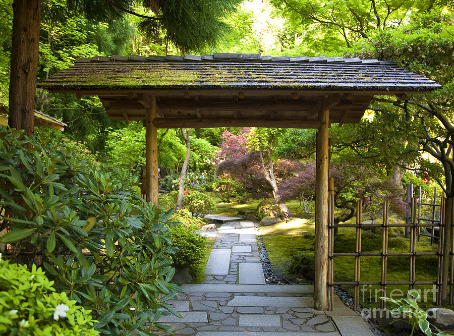 Japanese Garden Photograph by David Buffington