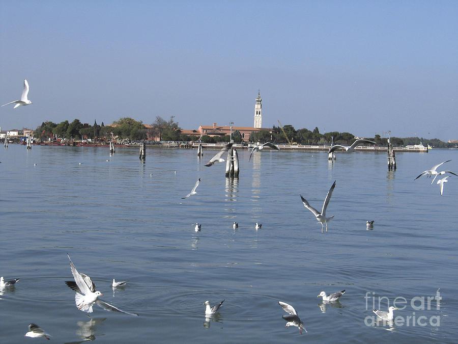 Lagoon. Venice Photograph