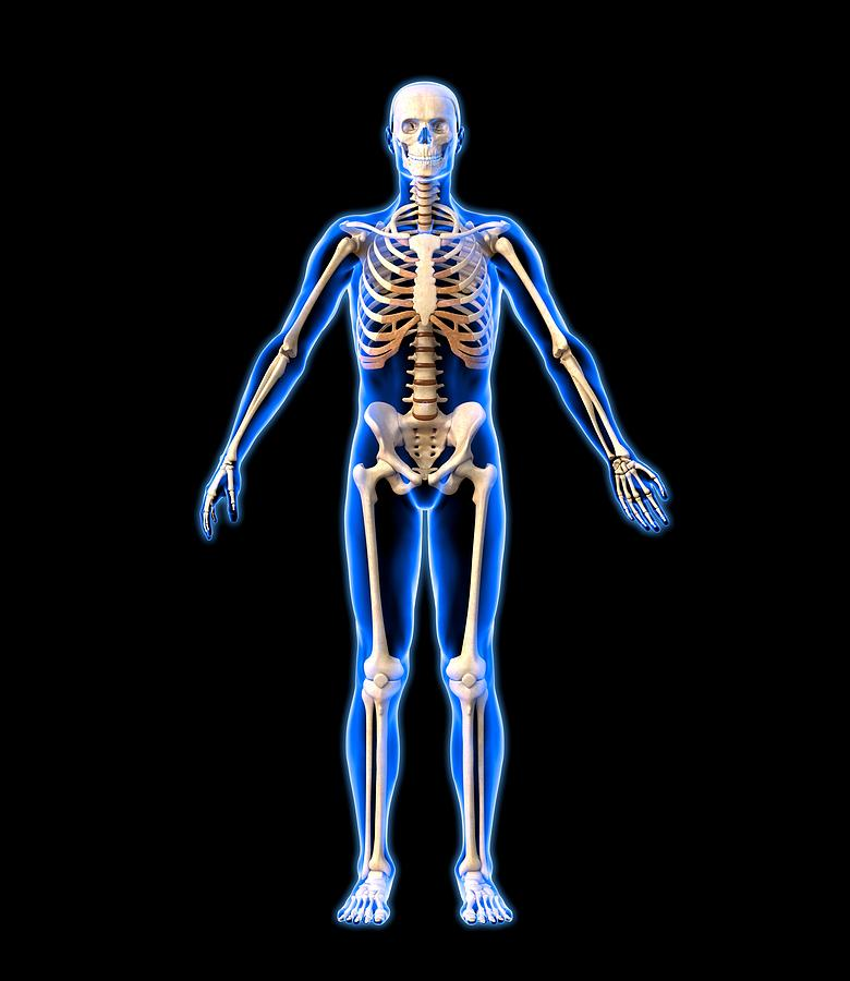 Male Skeleton, Artwork Photograph