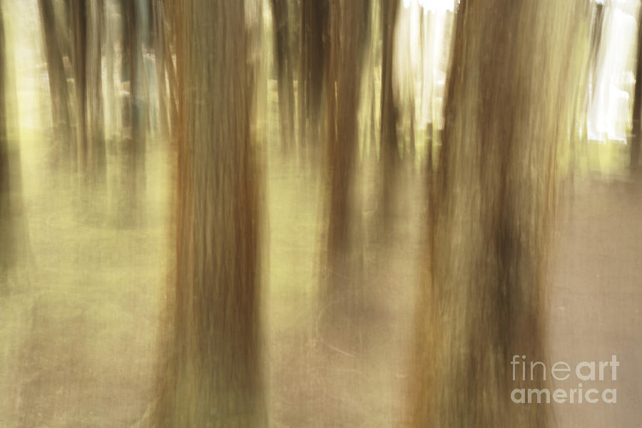 Nature Abstract Photograph
