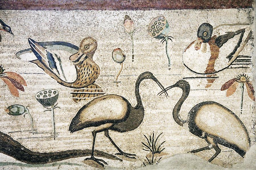 Nile Flora And Fauna, Roman Mosaic Photograph