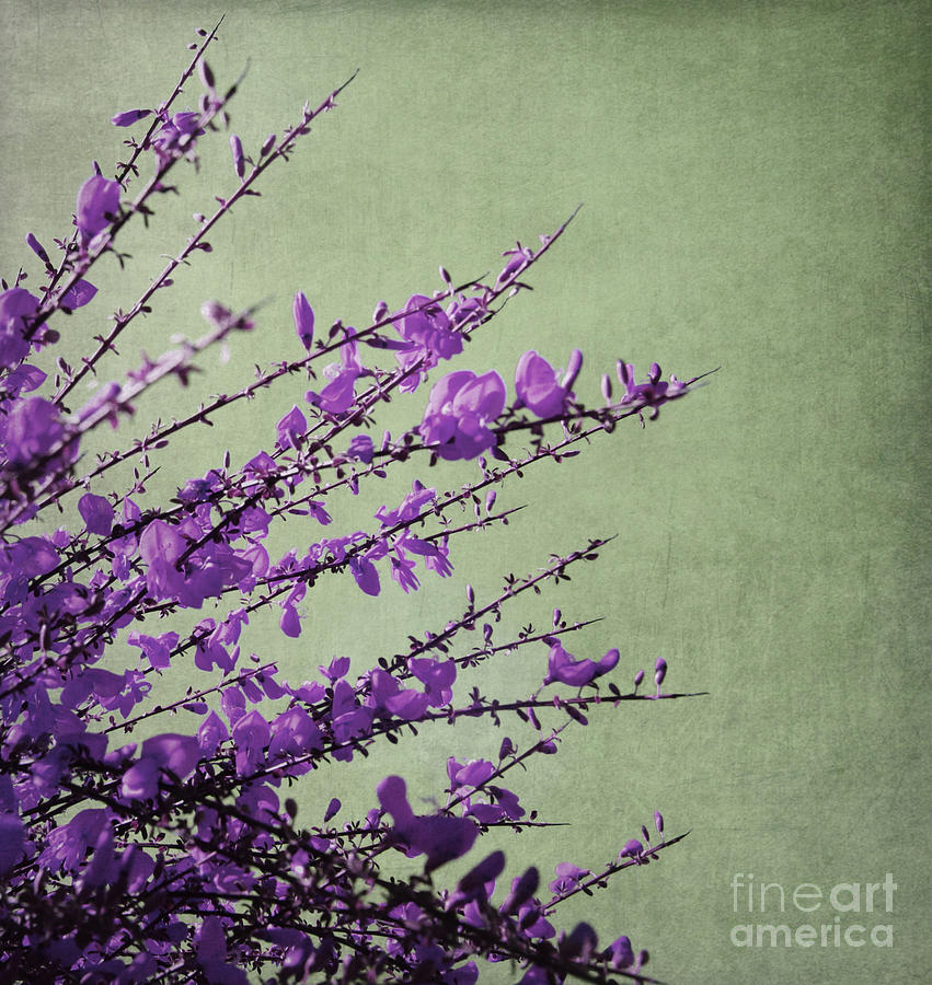 Purple Photograph  - Purple Fine Art Print