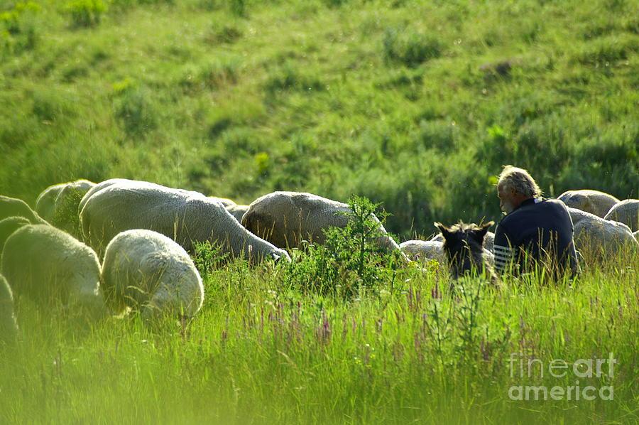 Nature Photograph - Shepherd by Odon Czintos