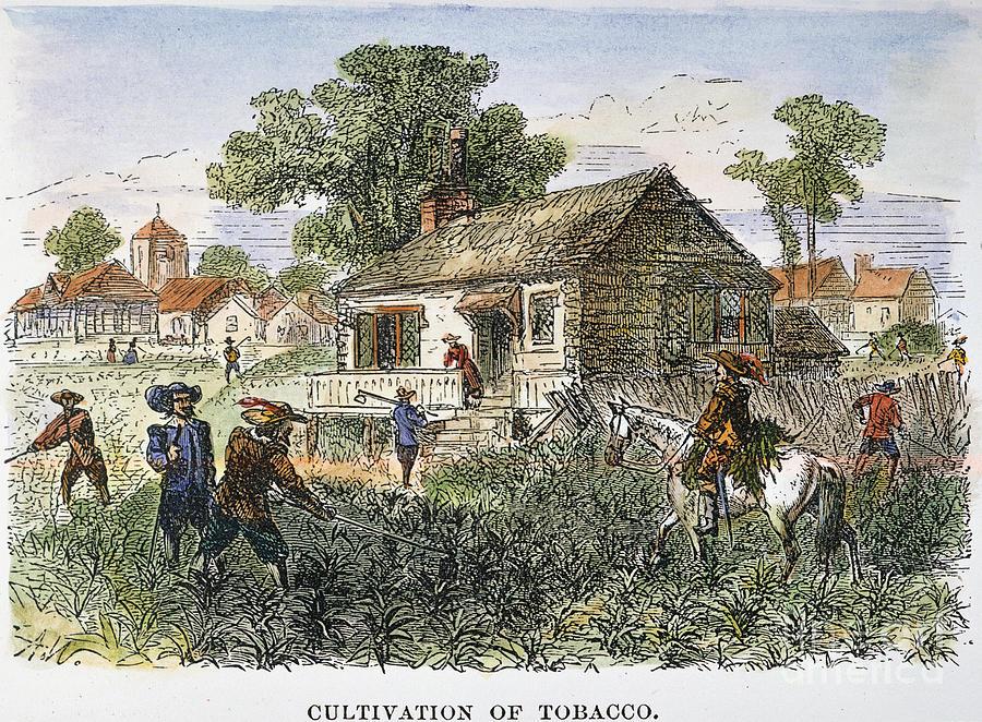 Tobacco Plantation Is ...