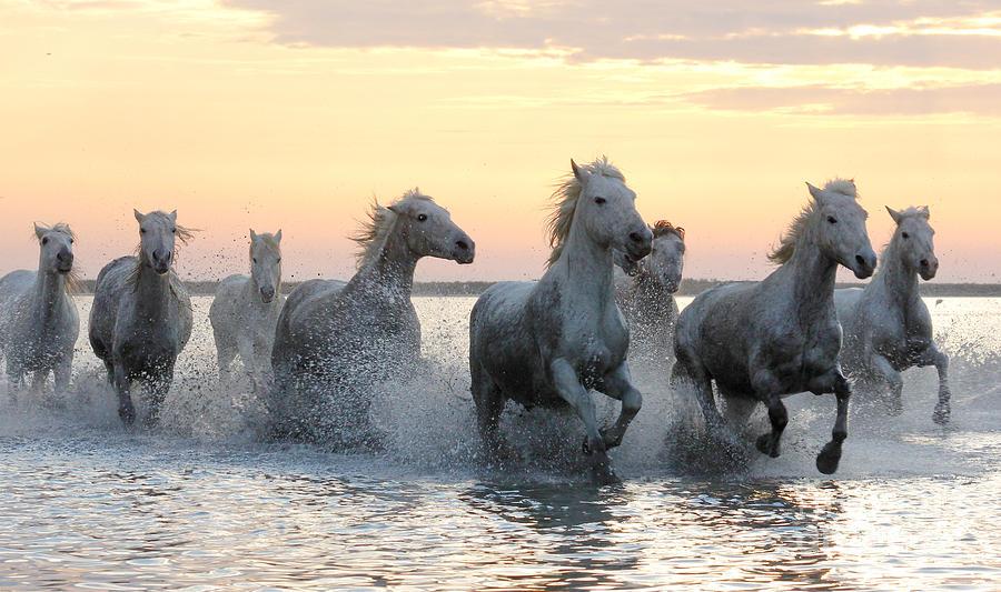 Wild Horses Pyrography