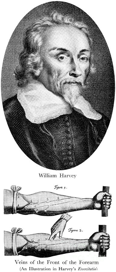 William Harvey, English Physician Photograph  - William Harvey, English Physician Fine Art Print