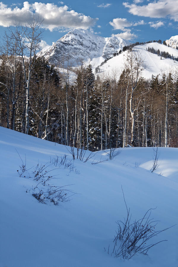 Winter In The Wasatch Mountains Of Northern Utah Photograph