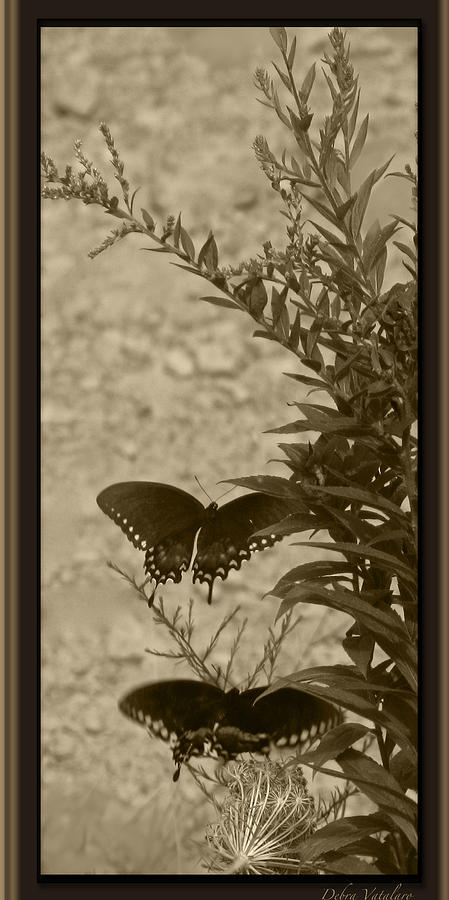 Its Not All B/w Art Photograph - Butterfly Collection by Debra     Vatalaro