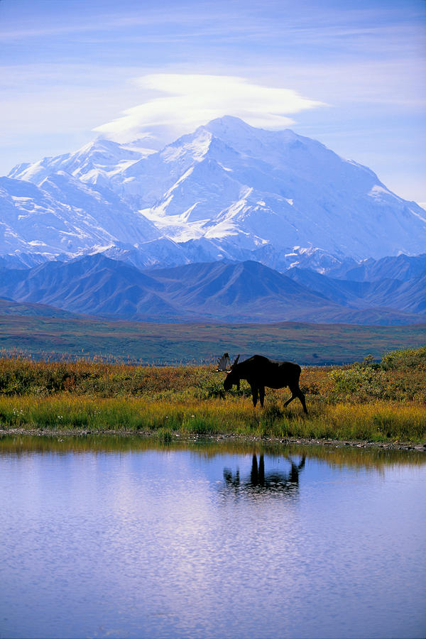 Denali National Park Photograph  - Denali National Park Fine Art Print