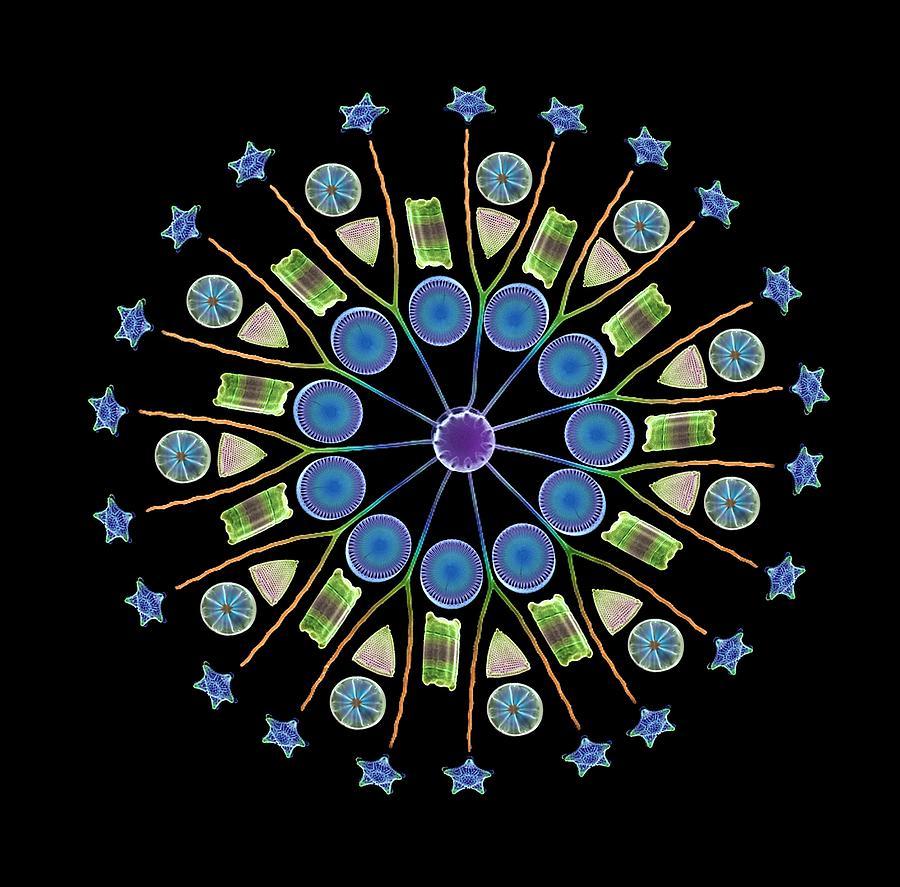 Diatom Photograph - Diatom Assortment, Sems by Steve Gschmeissner