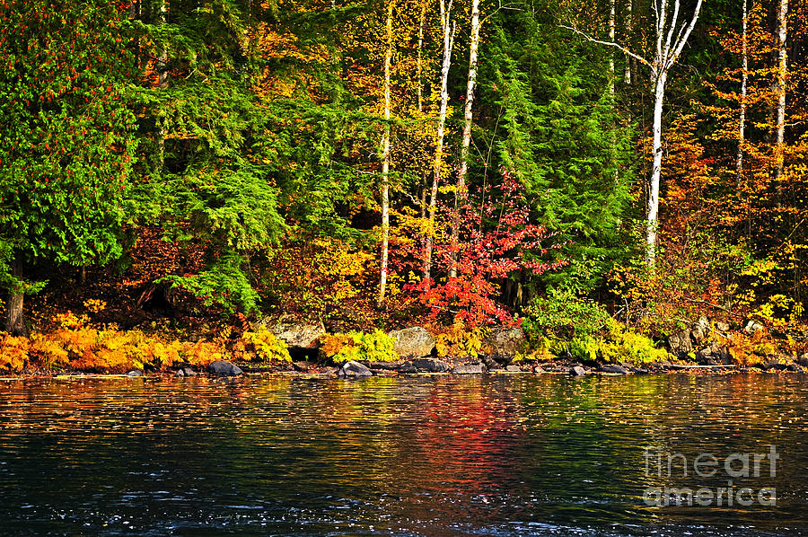 Fall Forest And River Landscape Photograph  - Fall Forest And River Landscape Fine Art Print